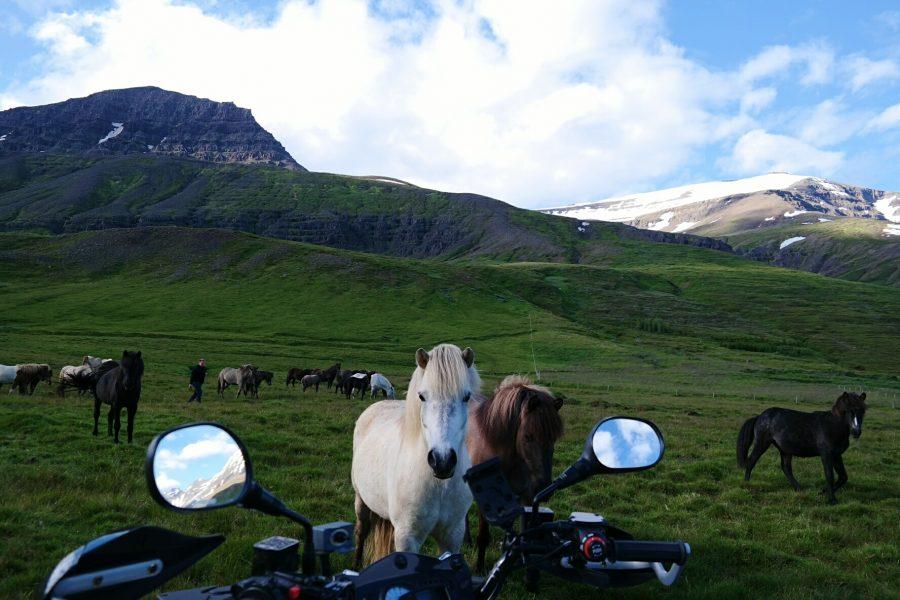 hevonen ja liikenne